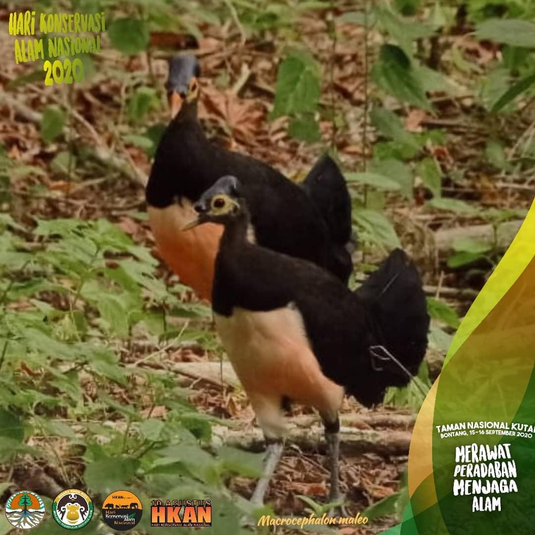 Hari Konservasi Alam Nasional 2020